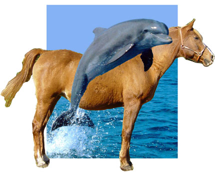 horse_dolphin
